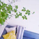お部屋改造計画②お部屋が一瞬でお洒落な癒し空間に!これからの季節は◯◯を飾ろう!生け方のコツ